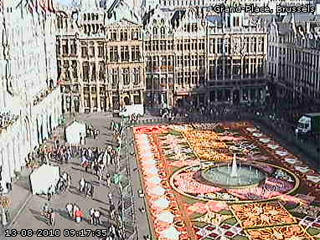 Flower carpet web cam Brussels
