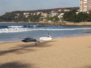Manly surf webcam