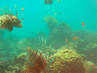 Nuweiba webcam - Nuweiba webcam, Gulf of Aqaba, Gulf of Aqaba